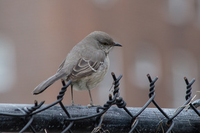 Lower East Side bird count